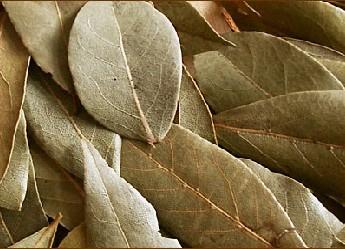 Лечение геморроя лавровым листом