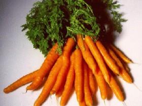 Морковь для лечения геморроя
