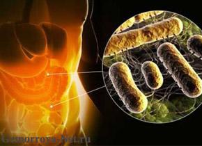 Может ли микрофлора кишечника донора спровоцировать ожирение?