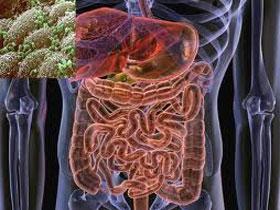 Существующие степени дисбактериоза кишечника